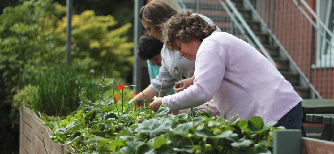 pendruccombe garden